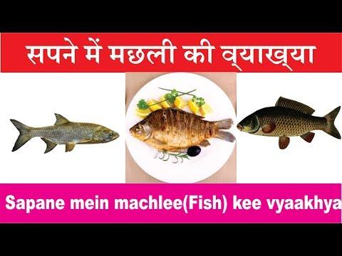 सपने में मछली की व्याख्या. Interpretation Of Fish In Dream. സ്വപ്നത്തിലെ മത്സ്യങ്ങളുടെ വ്യാഖ്യാനം