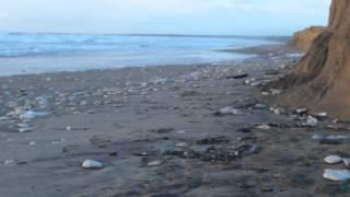 Tempête Oléron ,L'état de la plage du Grand Village Plage