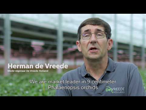 De Vreede Holland about LED lighting: ''Eco-friendly and orchid-friendly''
