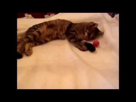 cat Lia - workout