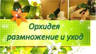 Орхидея - размножение и уход(Цветы #Орхидея #КомнатныеРастения В этом видео я рассказываю об одной из жительниц Сада на подоконнике..., 2016-03-30T13:45:09.000Z)