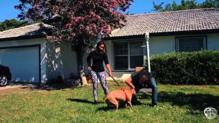 Rush K9: Dog Training Excellence (opportunity Cost)