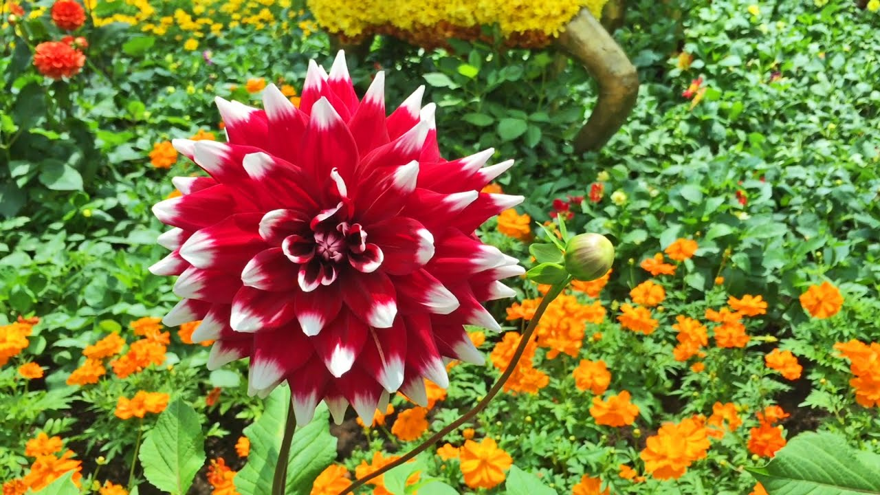 *Flowers* Of Asian Tales @ Gardens By The Bay   CNY (Jan Mar 2015)   YouTube