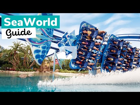 SEAWORLD: What to Know Before You Go