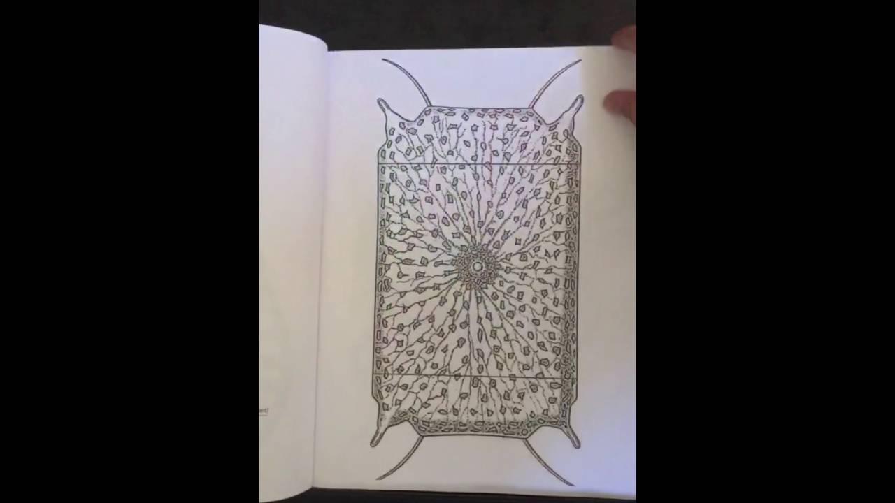 Incredible Life Forms Scientific Coloring Book Flipthrough