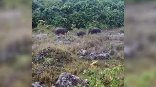 Gajah 'melepak' keliling rumah