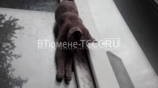 В Тюмени застрявшую мертвую кошку в окне едят сородичи
