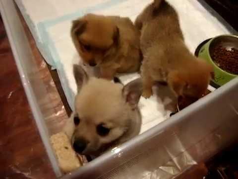 Очаровательные щенки, дети любви