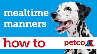 How To Train Your Dog To Have Mealtime Manners (petco)