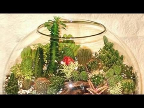 Флорариум из аквариума своими руками 768