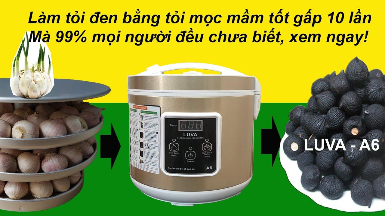 Cách làm tỏi đen bằng máy làm tỏi đen LUVA A6 (mới) và tỏi cô đơn mọc mầm | How to make black garlic