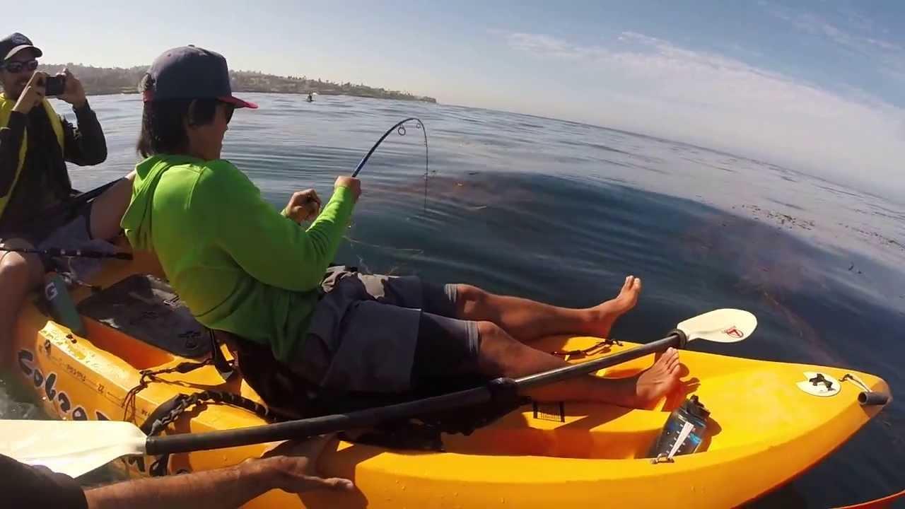 Reeling in a monster kayak fishing in la jolla youtube for La jolla fishing