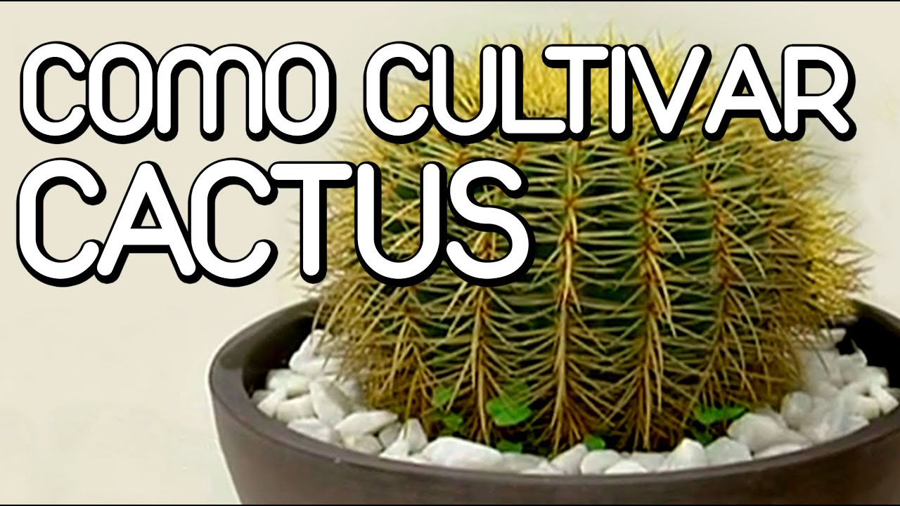 Como cuidar los cactus y suculentas youtube for Decoracion con plantas crasas