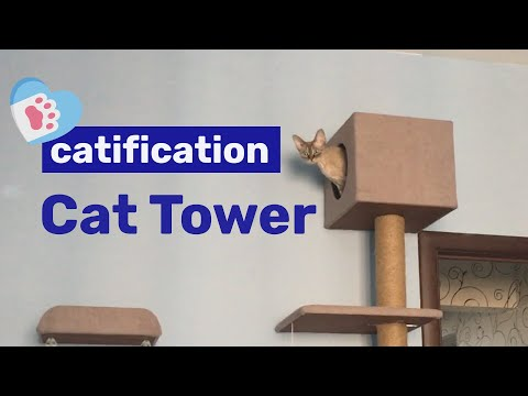 Cat Tower | My life with Devon Rex