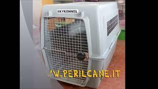 Trasportino per cani di taglia gigante per aereo Sky Vari Kennel. PERILCANE.IT
