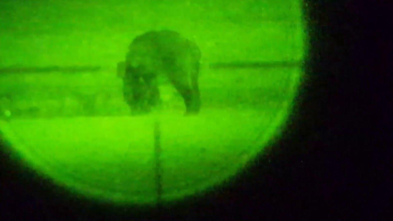 Wildschweine nachtsichtgerät wildboar nightvision youtube