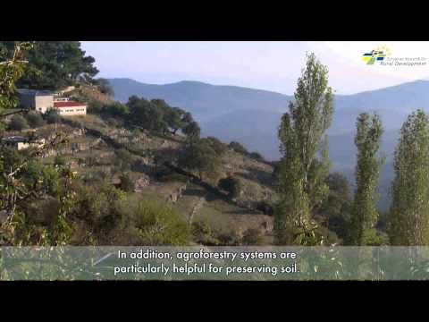 Supporting rural jobs and agroforestry landscapes in Lesvos