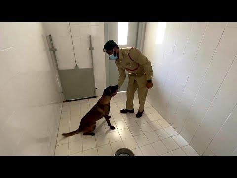 بالدراسة والتطبيق.. حاسة الشم لدى الكلاب سلاح فعال للكشف عن كوفيد في دبي…  - نشر قبل 2 ساعة