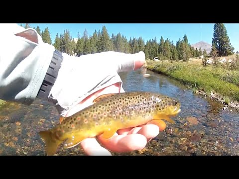Fly Fishing On The Tuolumne River | Yosemite