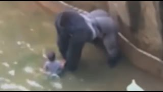 Горилла схватила ребенка 4х лет в зоопарке Цинцинатти