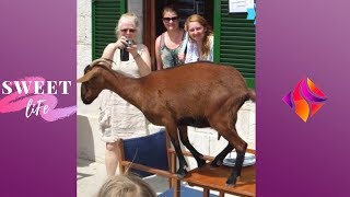 Best People and Animals Fails Compilation 2019 | Crazy Animals 🤣