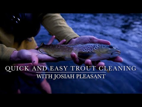 Quick and Easy Trout Cleaning