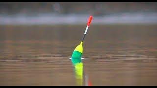 Активный клёв карася туманным утром. Рыбалка на поплавок. Поклёвки крупным планом.