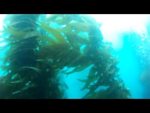 Catalina Scuba Trip 6-1-12