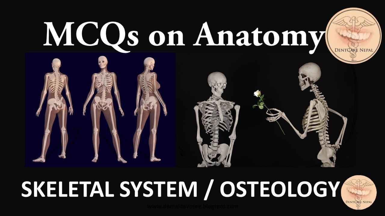 Anatomy Mcqs Skeletal System Osteology Youtube
