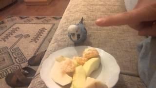 Muhabbet kuşumla Meyve Yeme Savaşimiz