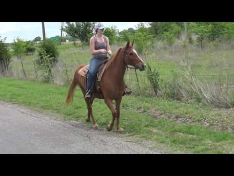 10-YO Sorrel Gaited TWH mare, beginners horse