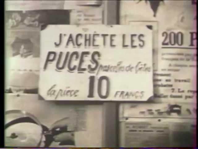 puces savantes
