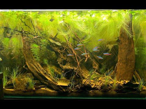 Оформляем биотопный аквариум с EHEIM