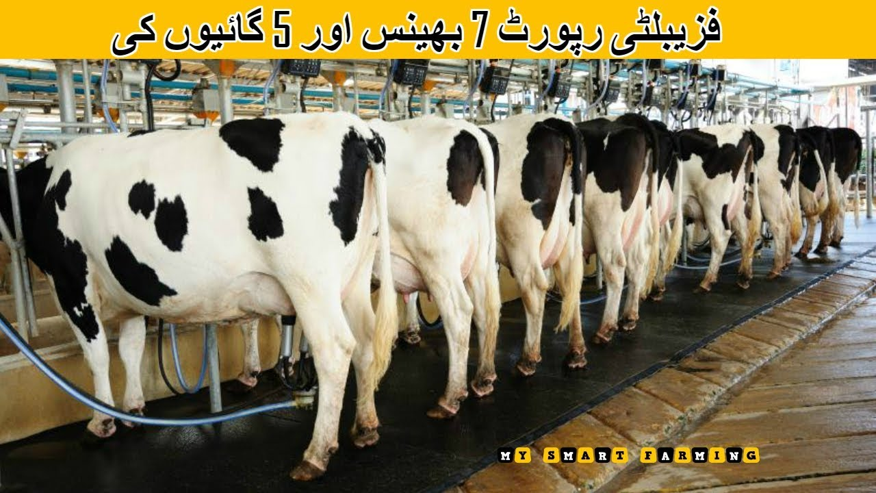 61 Feasibility Report For 7 Buffalo 5 Cows Dairy Farming In Pakistan India