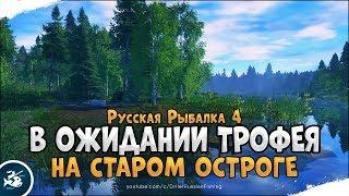 Закрываем трофеев на Старом Остроге Русская Рыбалка 4 Стрим