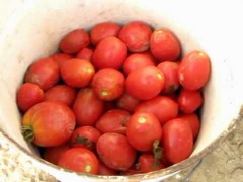 Tomates Al Baño Maria | Embotar Tomate Conserva De Tomate Mpg Youtube