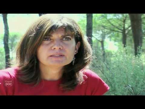 Iberian Lynx Documentary | Part 7