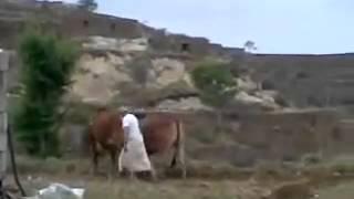 حراثة الارض في اليمن ارض السعيده ومنبع الجمال