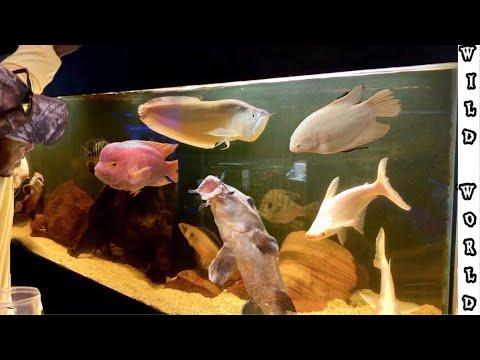 FEEDING MINI PET MONSTERS AT FISH'S PARADISE: FISH TOUR