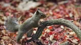 Marco l'ami des animaux - L'écureuil