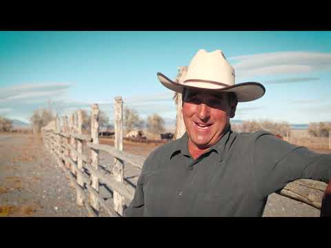 International Brangus Breeders Association | American Rancher