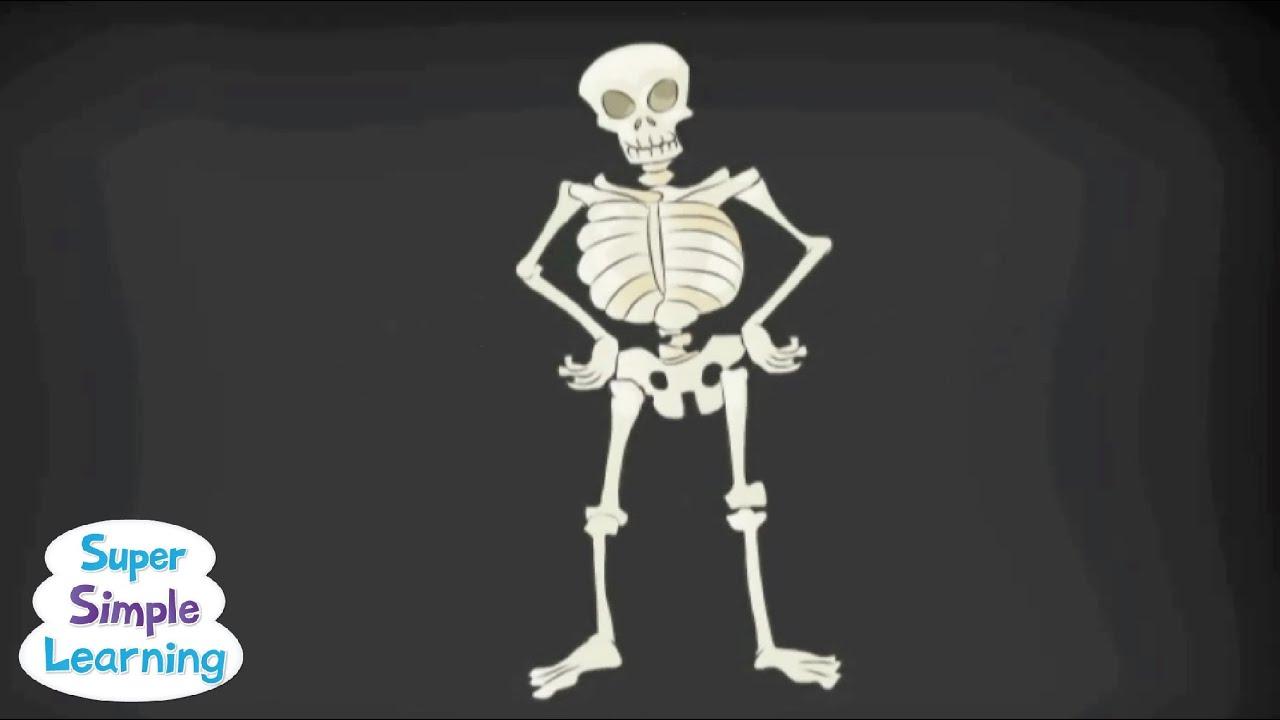 hight resolution of Skeletal System - Scoilnet