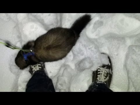 ferret Spike in the snow - part 2