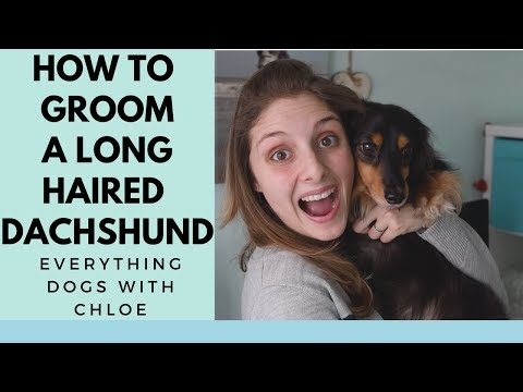 HOW TO GROOM A LONGHAIRED DACHSHUND