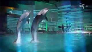 "LRT projektas ""Delfinai ir žvaigždės"" (1) HD"