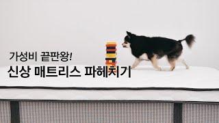 가성비 끝판왕!  신상 매트리스 파헤치기|마켓비 SIL…