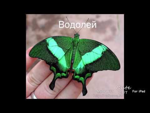Злая бабочка снится к чему