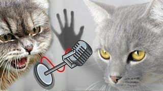 Песня кота Макса и кошки Матильды (премьера клипа 2019)
