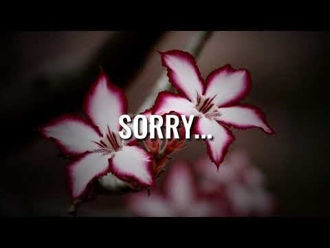 Sorry 💔 Sad Shayari Whatsapp Status 💔 Heart Touching Shayari Status