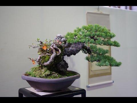 Bonsai Styles Fukinagashi Youtube